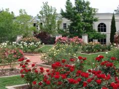Dunn Formal Rose Garden DSC05426